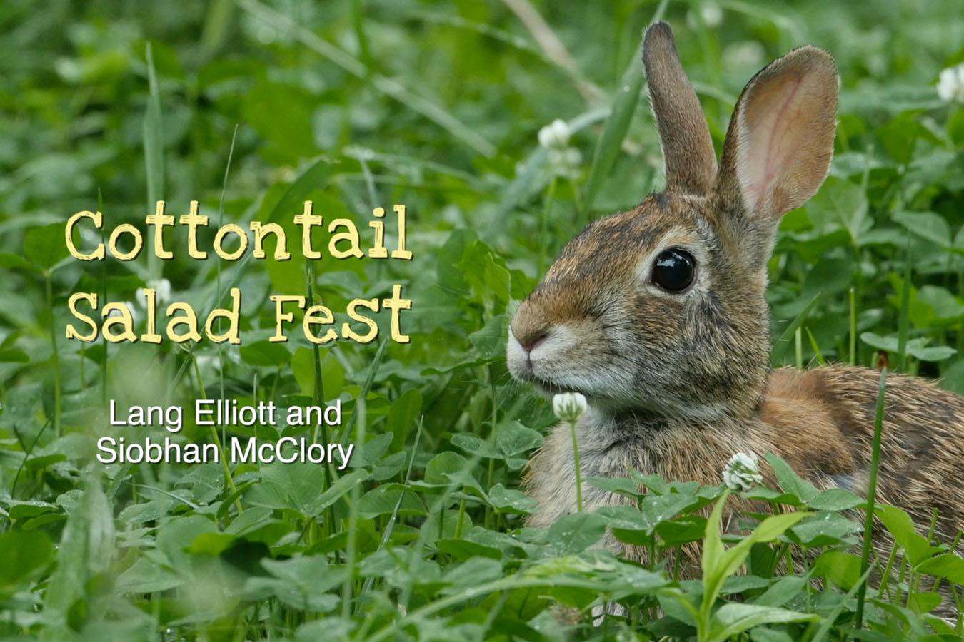 Cottontail Salad Fest featured image © Lang Elliott