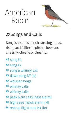 audubon_song_and_calls_3