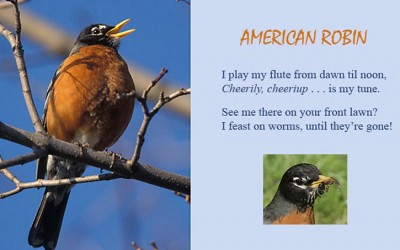 Bird Song Ditties (for kiddies)