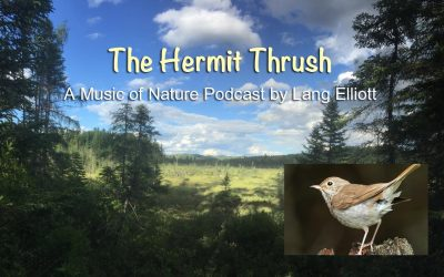 The Hermit Thrush – Podcast Prototype