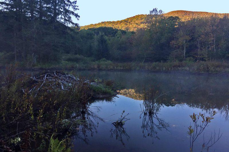 catskill beaver pond © Lang Elliott
