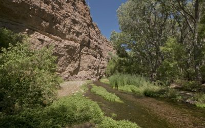 Aravaipa Waterscapes