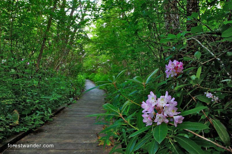 Cranberry Glades Botanical Area - from forestwander.com
