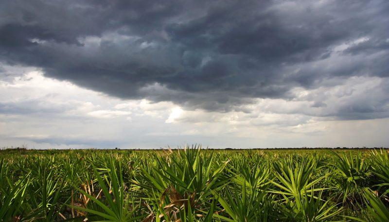Everglades Rain Dance - track art for album: Rain Moods