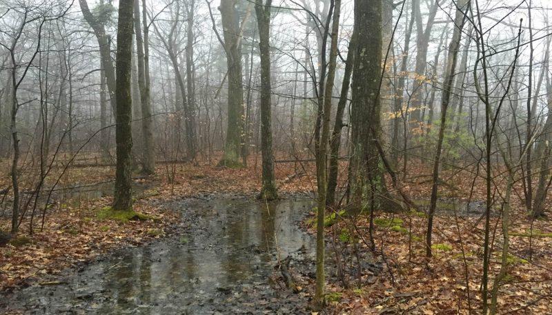 Fog Drizzle - track art for album: Rain Moods