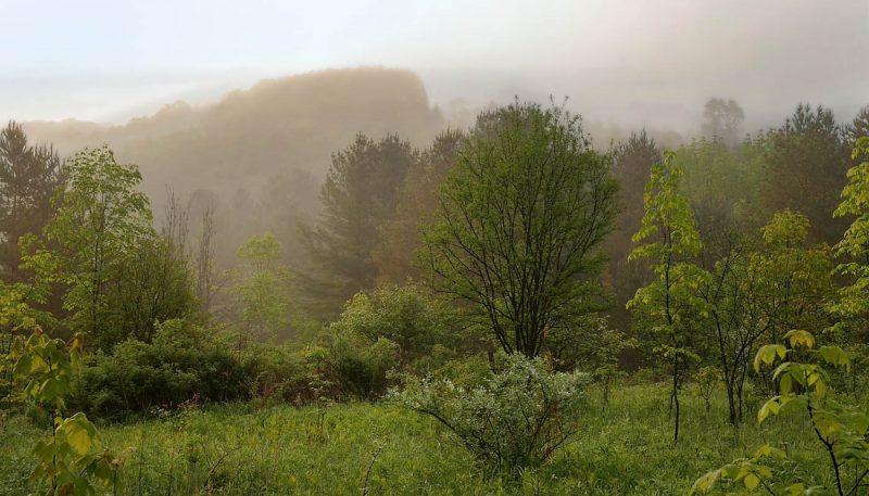 Meadow After Rain - track art for album: Rain Moods