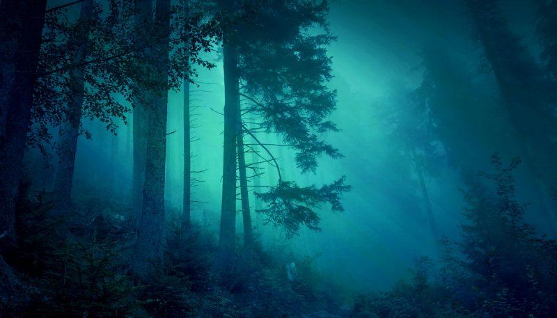 Owl Hollow - track art for album: Atmospheric Surround