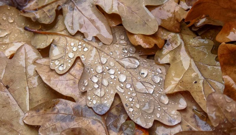 Winter Rain - track art (Elementals)