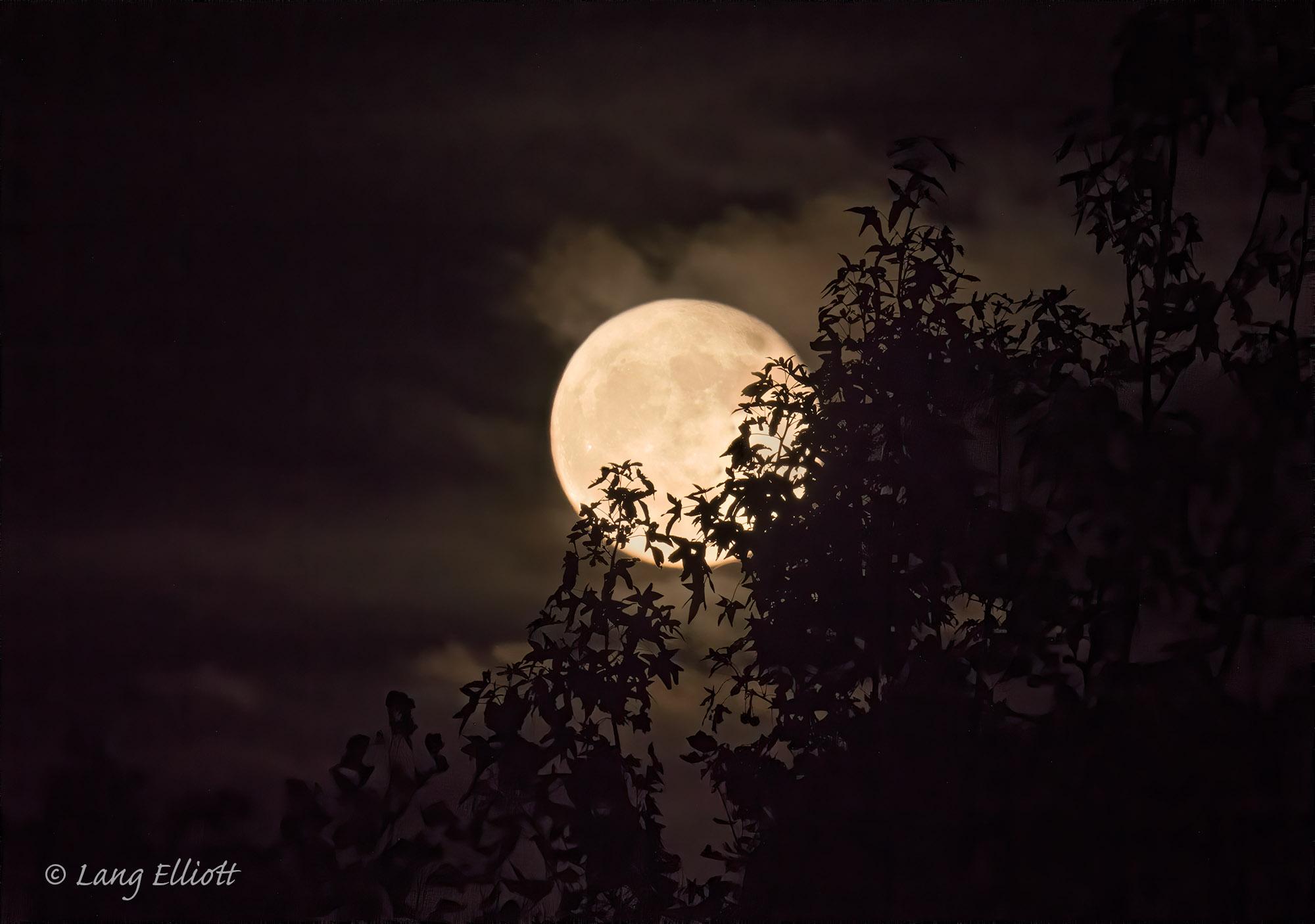 Full moon at Land Between the Lakes © Lang Elliott